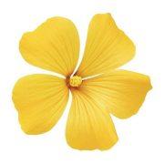 Şiirli Çiçek – Benzeri Olmayan Bir Çiçek Gönderme Hizmeti.!